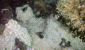A. D. Rogers et al. in PLoS Biology, found via Wikimedia.