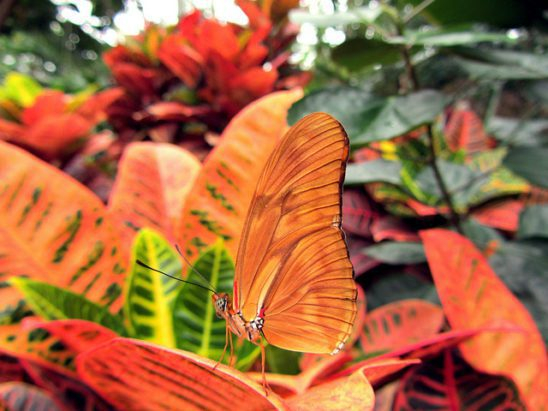 An orange butterfly camouflaged amongst orange leaves