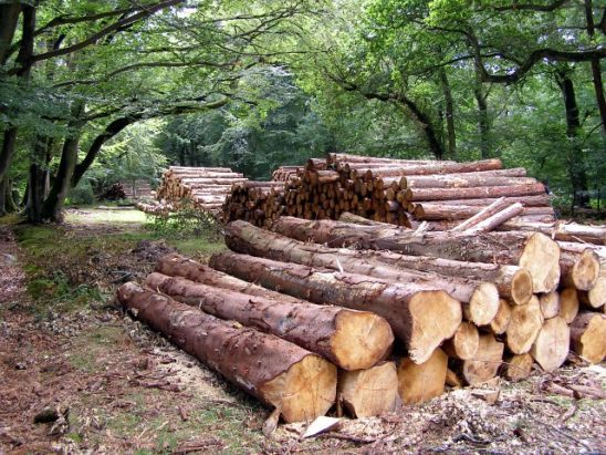 Timber stacked on a forest path.