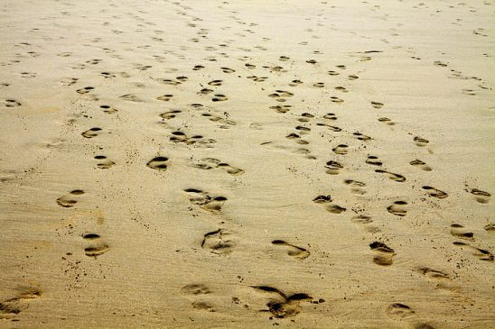 Several sets of footprints in the sand.