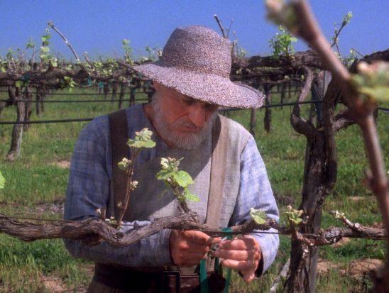Future Picard tending his vines.