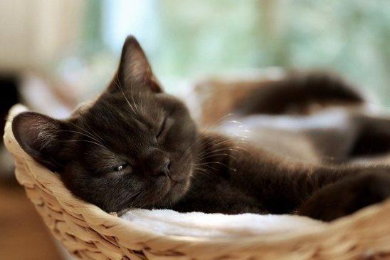 A sleeping cat in a basket.