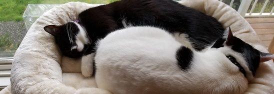 Two kitties sleeping in a cat bed.