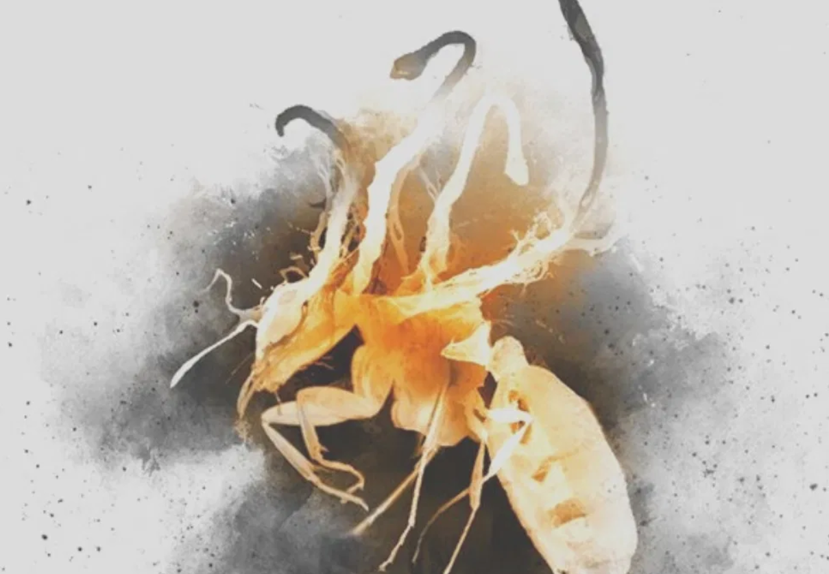 A glowing ant with fungal tendrils from Agents of Dreamland cover art.